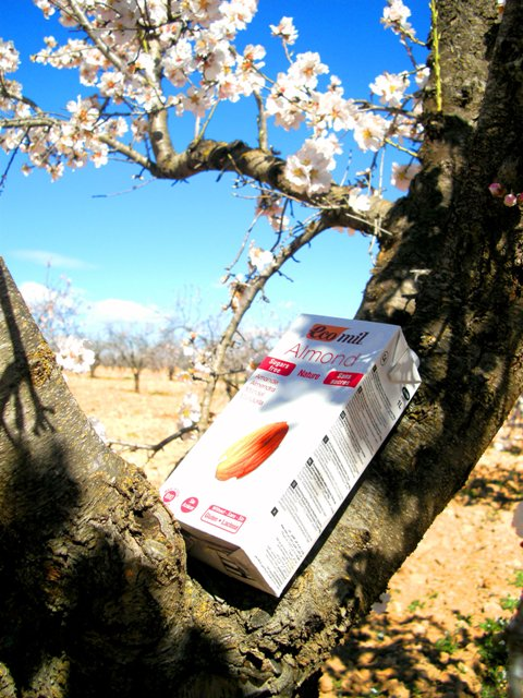 Almond trees in bloom Ecomil